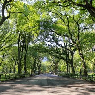 2 - Central Park (Small).jpg