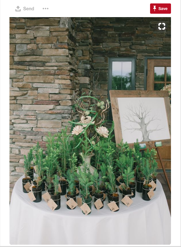 Another great idea to offer at wedding gifts for your guests is an actual tree!