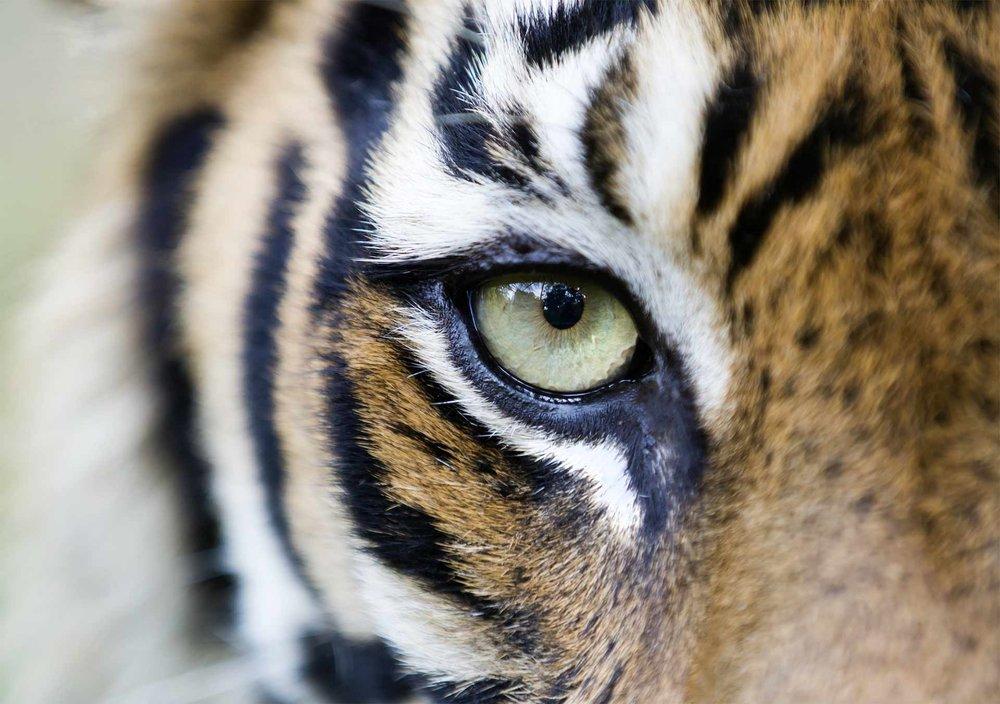 Clare Campbell Wildlife Asia