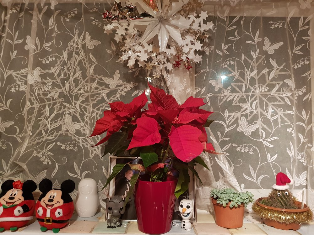 Christmas on the window sill Poinsetta and teddies