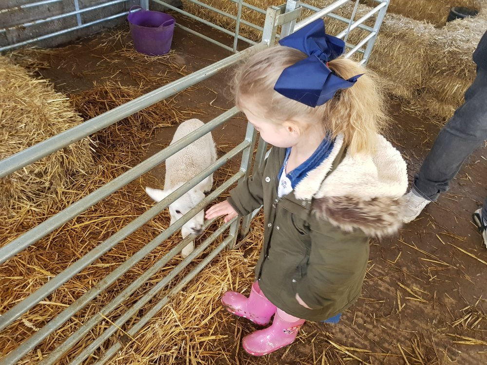 My daughte visiting a local farm and meeting new lambs