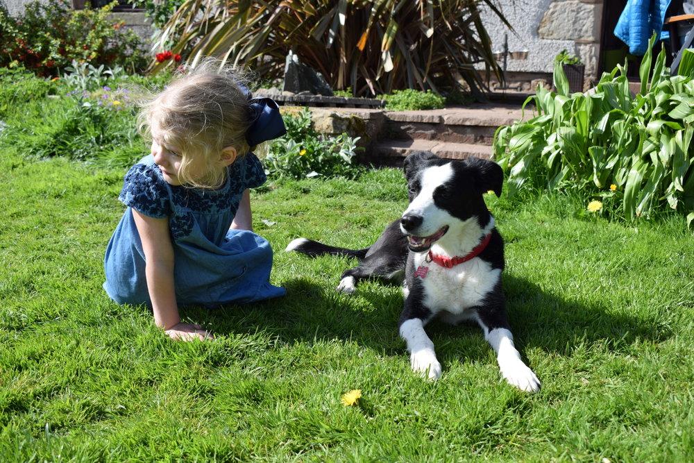 Stocks Wood Farmhouse puppy