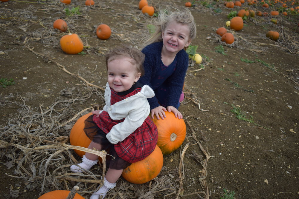 pumpkin picking at Hill Farm pick your own Peterborough