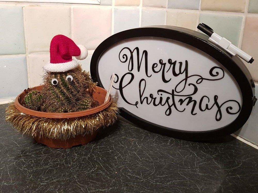 Merry Christmas Santa cactus