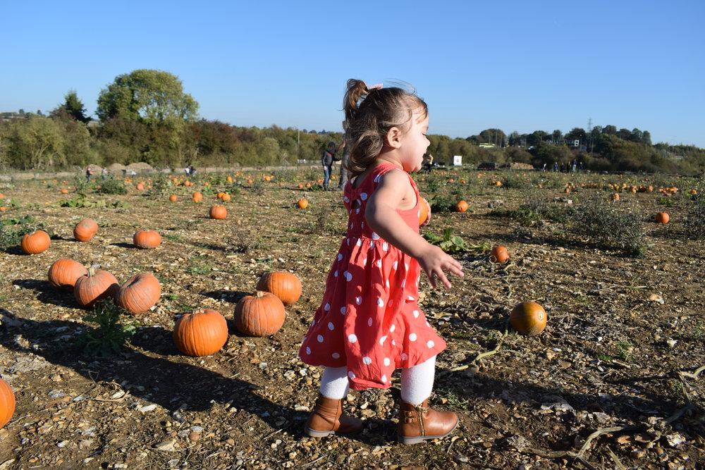 Pickle pumpkin picking at The Pop-Up Farm pumpkin patch