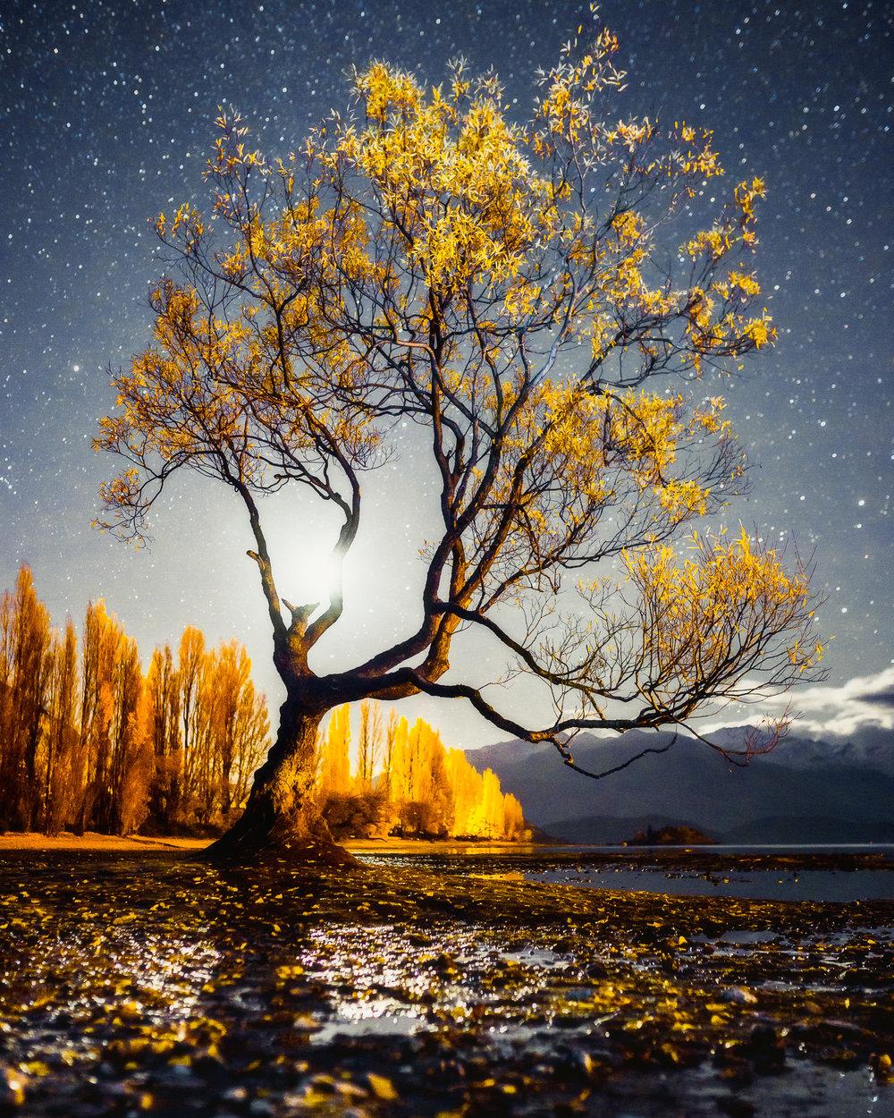 WANAKA TREE UNDER MOONLIGHT