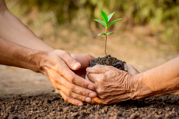 two-hands-old-woman-young-man-helping-plant-seedlings-soil_38663-91.jpg