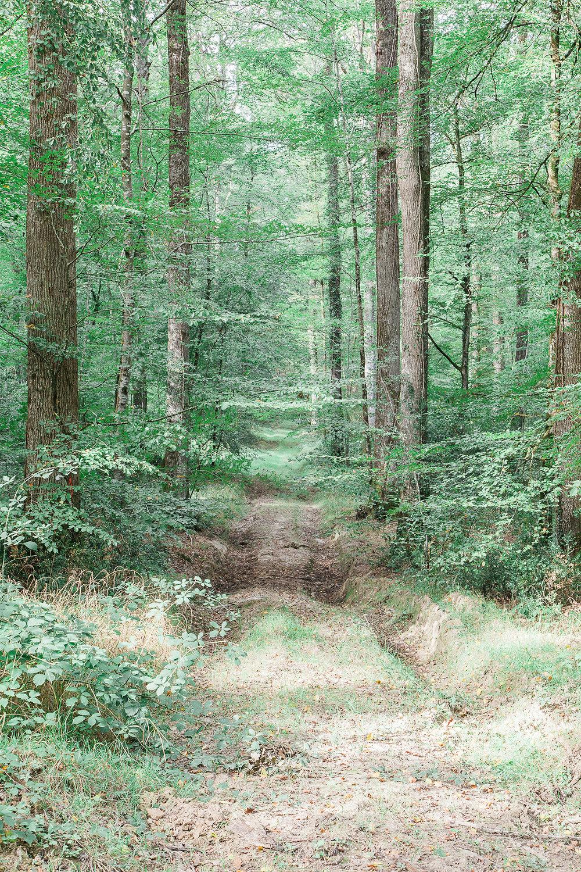 landscape  4643.jpg