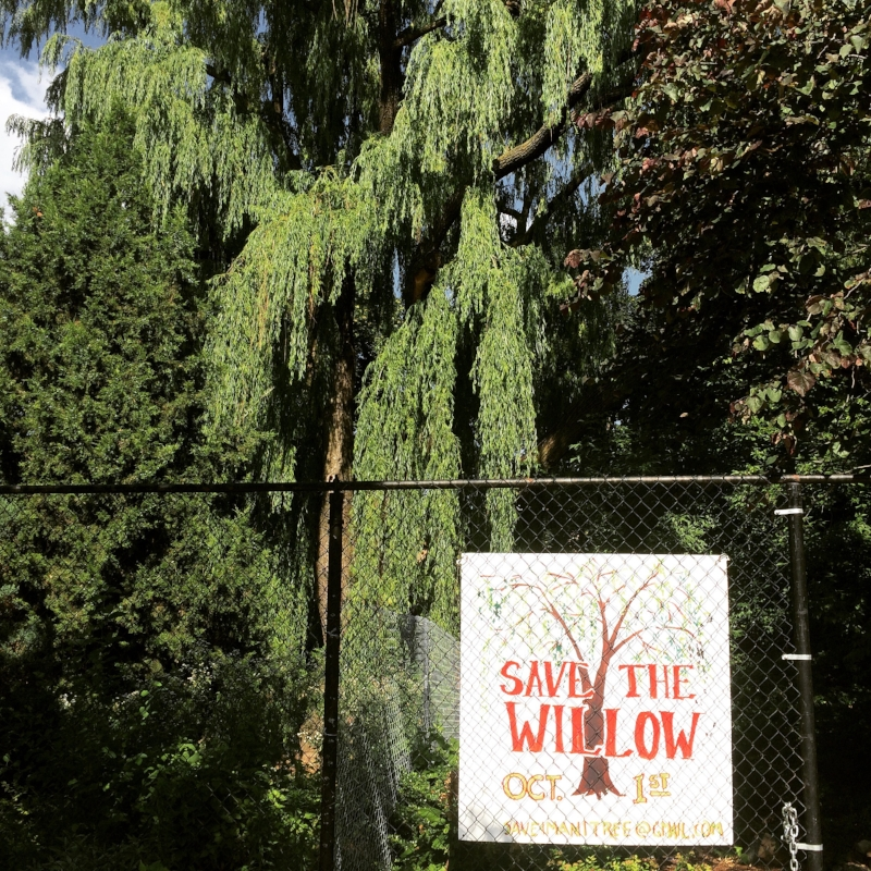 Save the Imani Community Garden Willow
