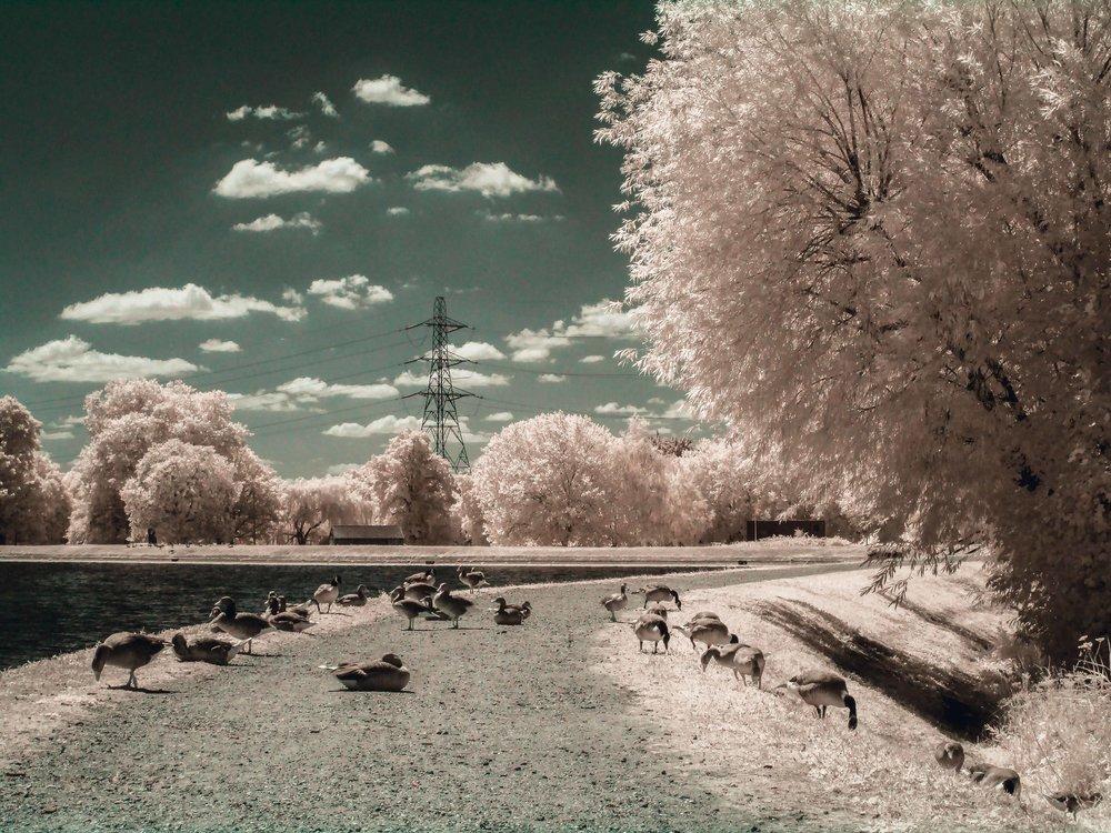 02 Walthamstow Wetlands