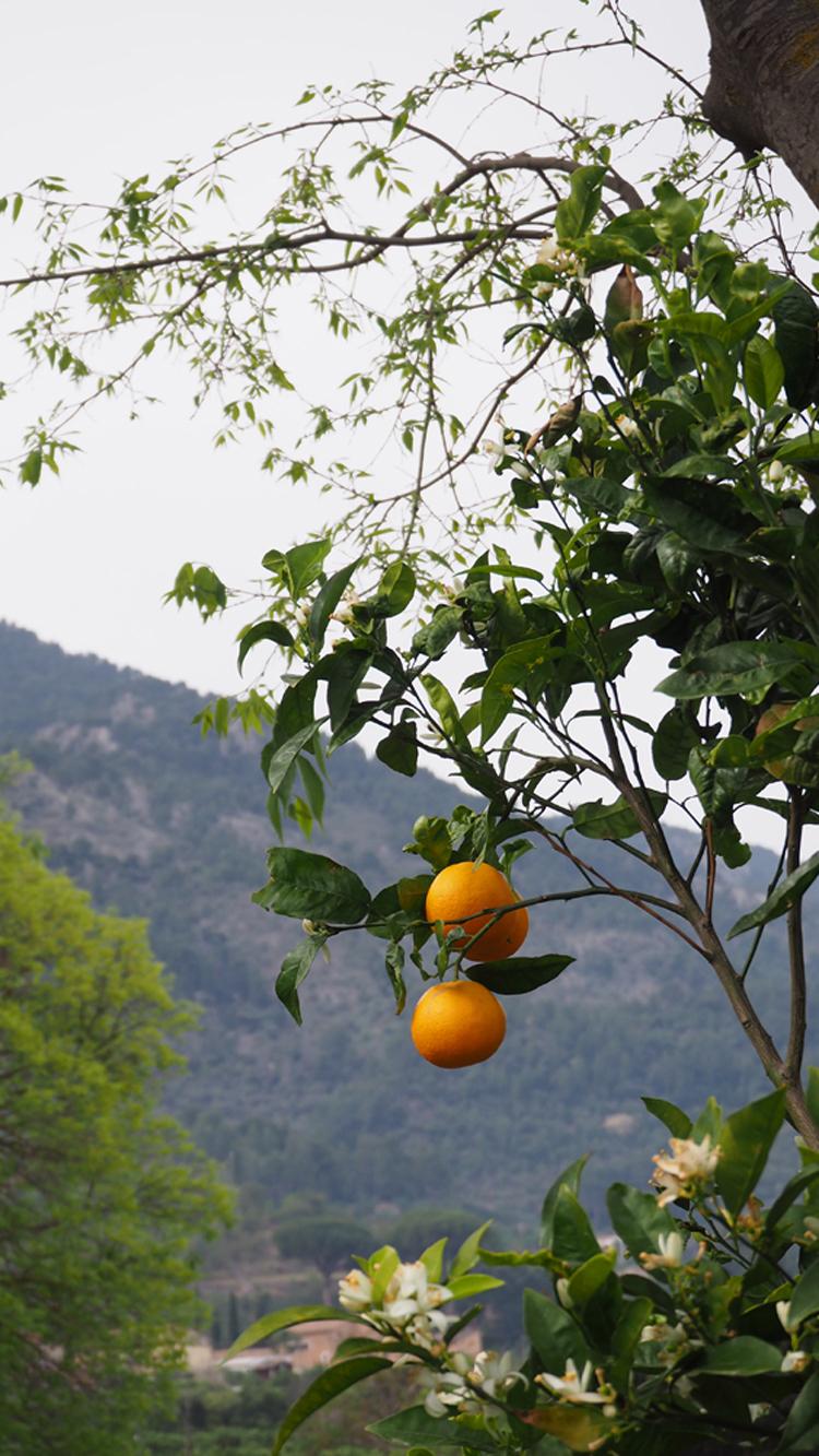 soller crop 1.jpg
