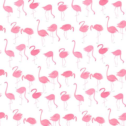 Flamingoes  - personal work