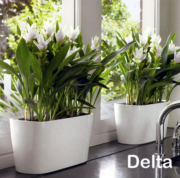 delta-low.jpg