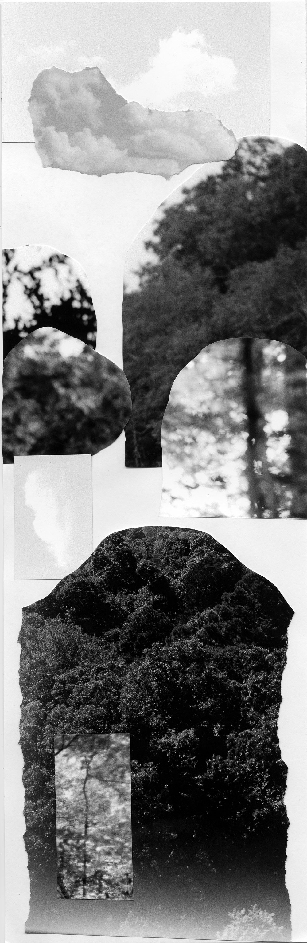 CollageTop 1.jpg
