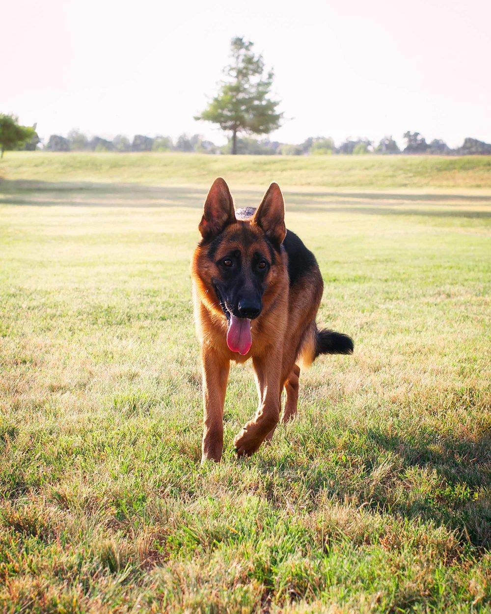 20150717-RnR-Dogs-8.jpg