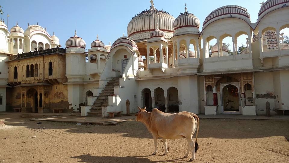 india tour.jpg