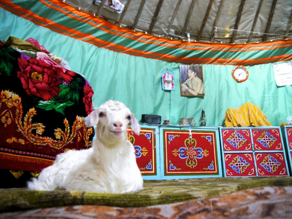 vasya in the yurt