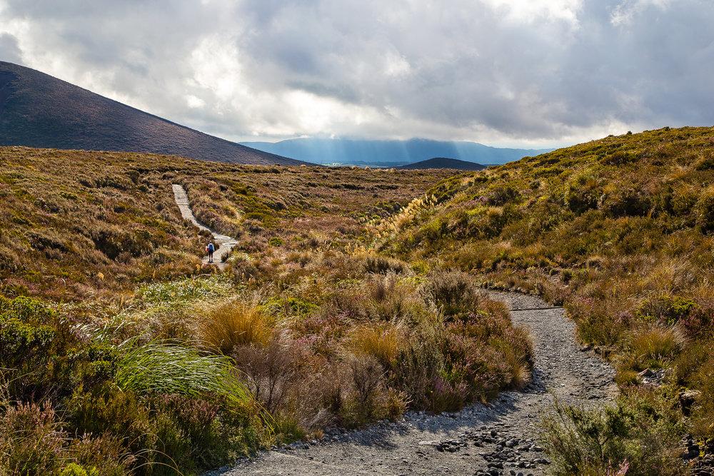 NZ_3.jpg