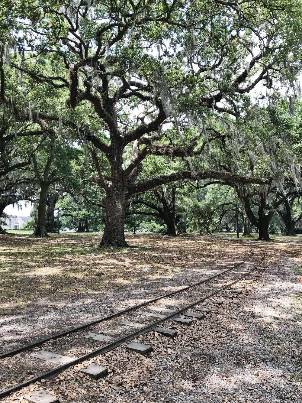 City Park, New Orleans