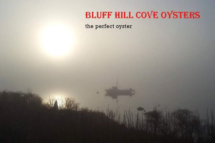 Bluff Hill Cove Oysters