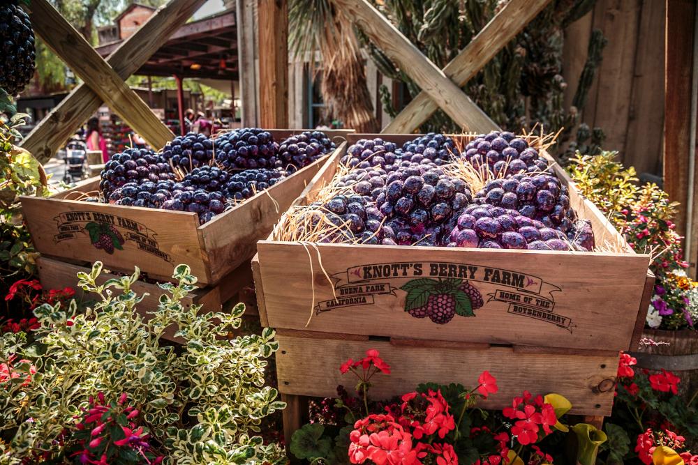 Photo Courtesy of Knott's Berry Farm.