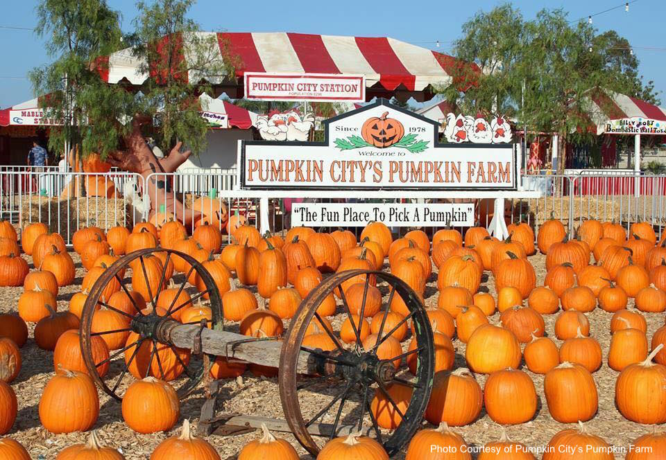 Pumpkin City's Pumpkin Farm.jpg