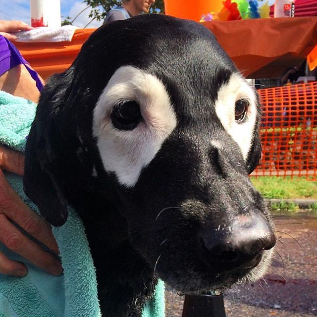 Life Is Good 💚❤️️💛 #lifeisgood #❤️ #keepportlandrowdy #colorful #beauty #dogs #dogslife #avrf #bathtime #furbaby #vitiligo #sweetboy #dogsofig #labsofinstagram #dog #famous #ellen #forthekids #sweetsoul