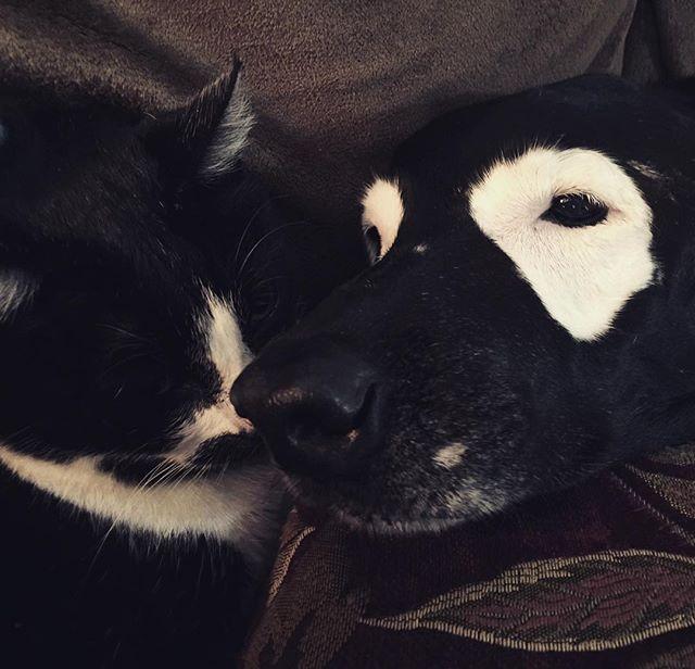 💋 Eskimo Kissy 💋#eskimokisses #😘 #dogs #cats #kisses #dogsandcats #catsanddogs