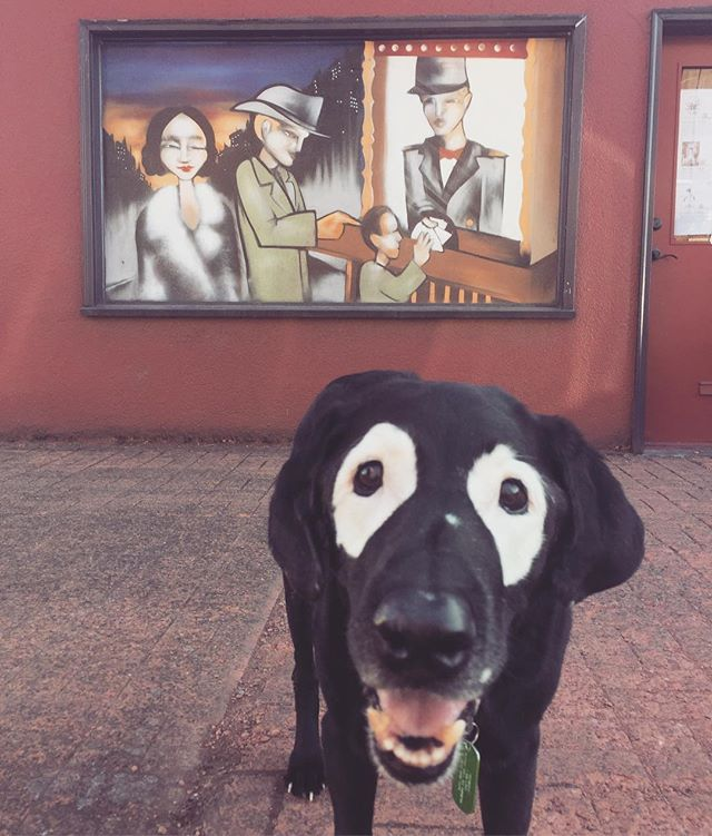 Going to the Movies 🎟🎬 #keepportlandrowdy #movies #famous #someday #maybe #talent #eugene #streetart #theater #davidminortheater #saycheese #doglover #dogs #dogstagram #dogsofig #dogsofinstaworld #uniquedog #oneofakind #happy