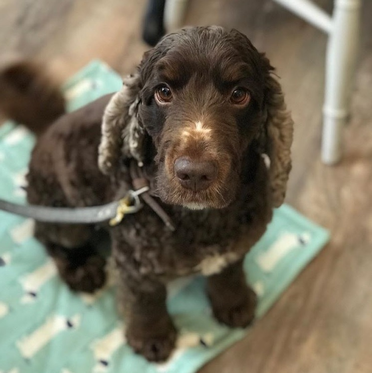 Credit: Dexter, a happy visitor to The Teacup Tearoom