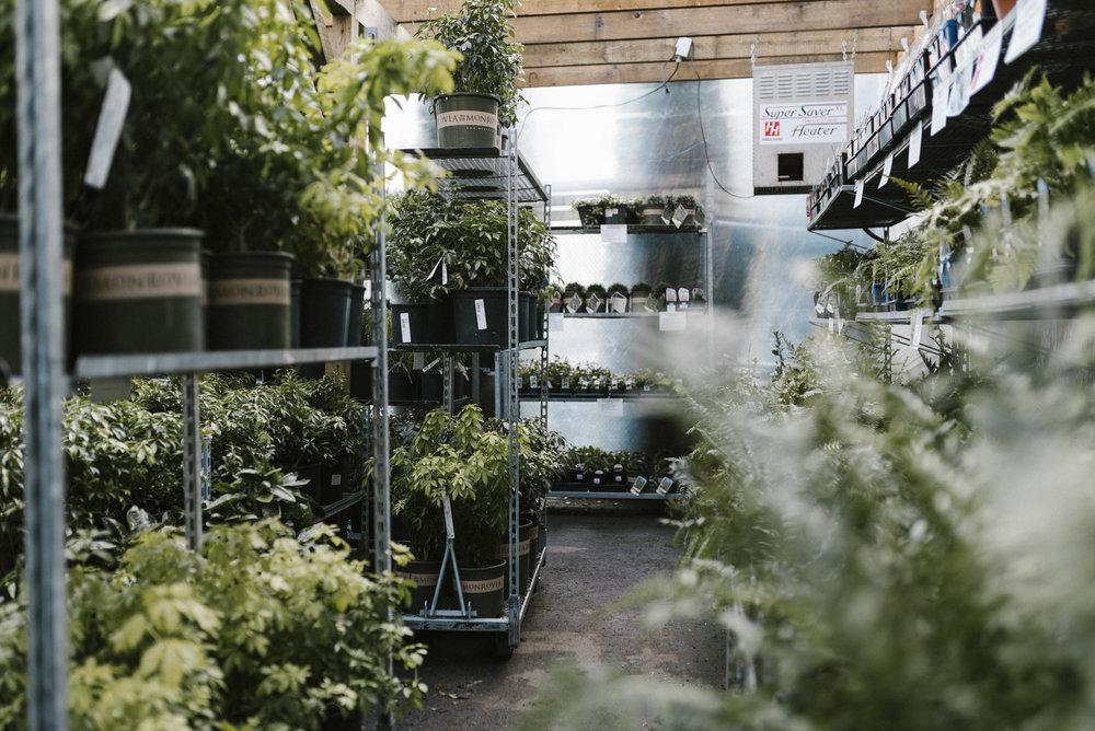 www.sabrinamayphotography.com,Floral,greenhouse-3.jpg