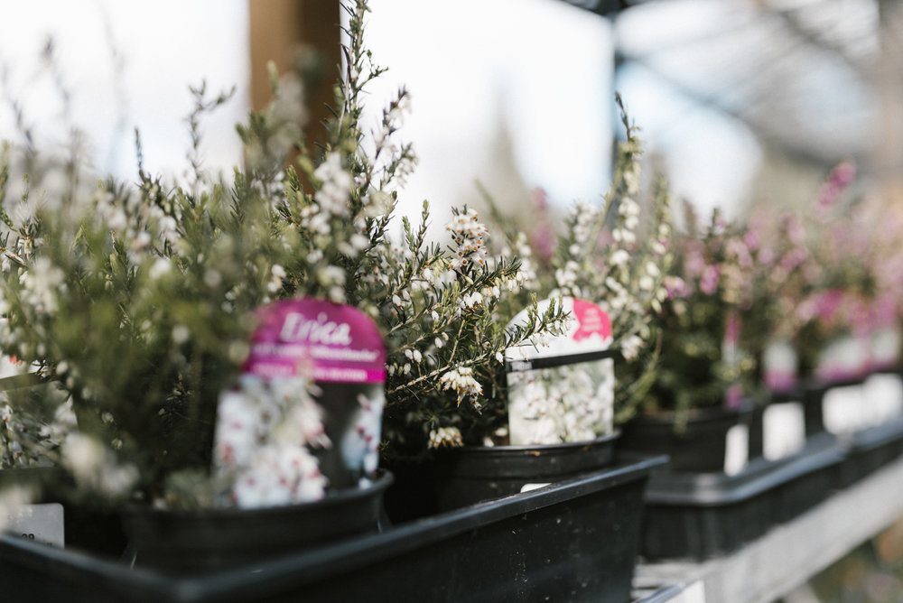 www.sabrinamayphotography.com,Floral,greenhouse-6.jpg