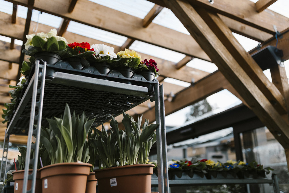 www.sabrinamayphotography.com,Floral,greenhouse-7.jpg