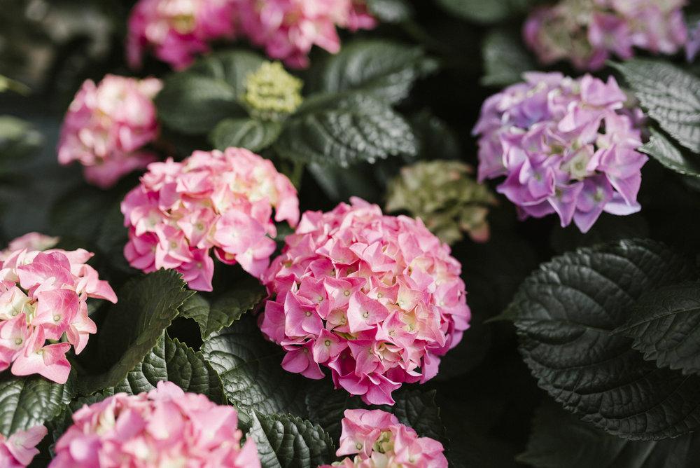 www.sabrinamayphotography.com,Floral,greenhouse-11.jpg