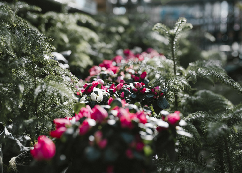 www.sabrinamayphotography.com,Floral,greenhouse-12.jpg