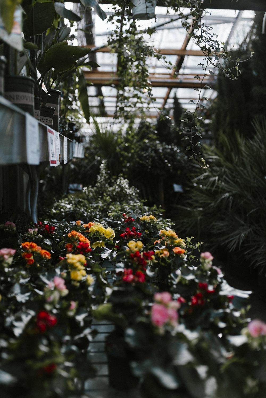 www.sabrinamayphotography.com,Floral,greenhouse-14.jpg