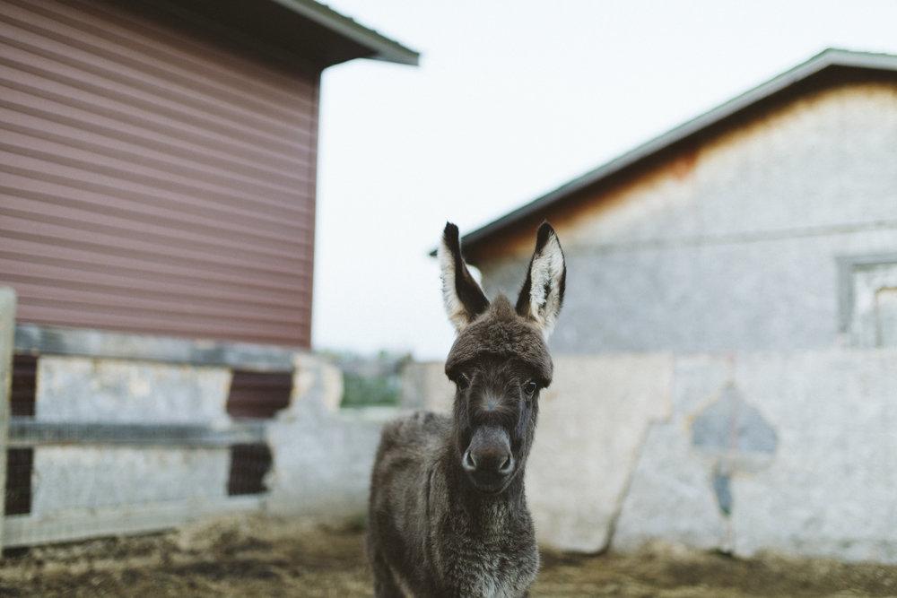 sabrinamayphotography,lifestyle,dawsoncreek-44.jpg