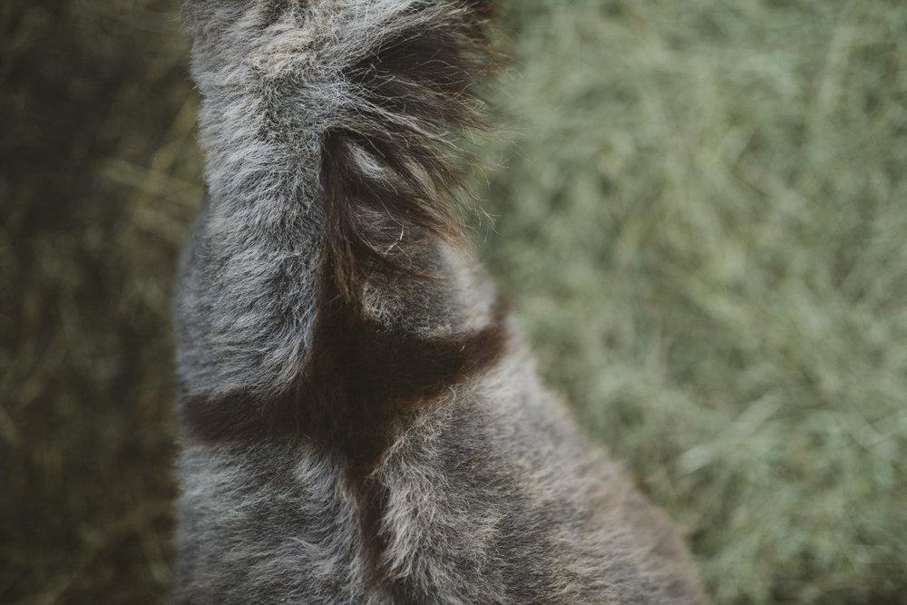 sabrinamayphotography,lifestyle,dawsoncreek-51.jpg