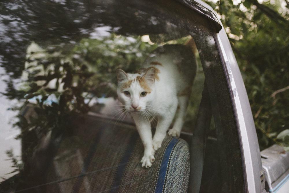 sabrinamayphotography,lifestyle,dawsoncreek-63.jpg