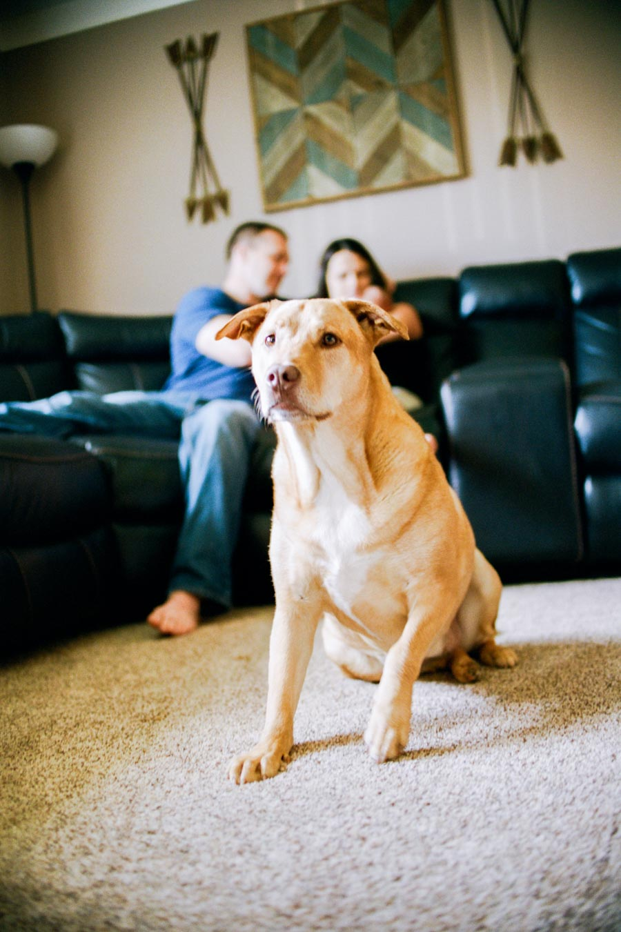 Guard dog on watch during in-home lifestyle newborn session Downriver Detroit Michigan.Detroit Lifestyle Family Film Photography - Ashley Burnside Photography