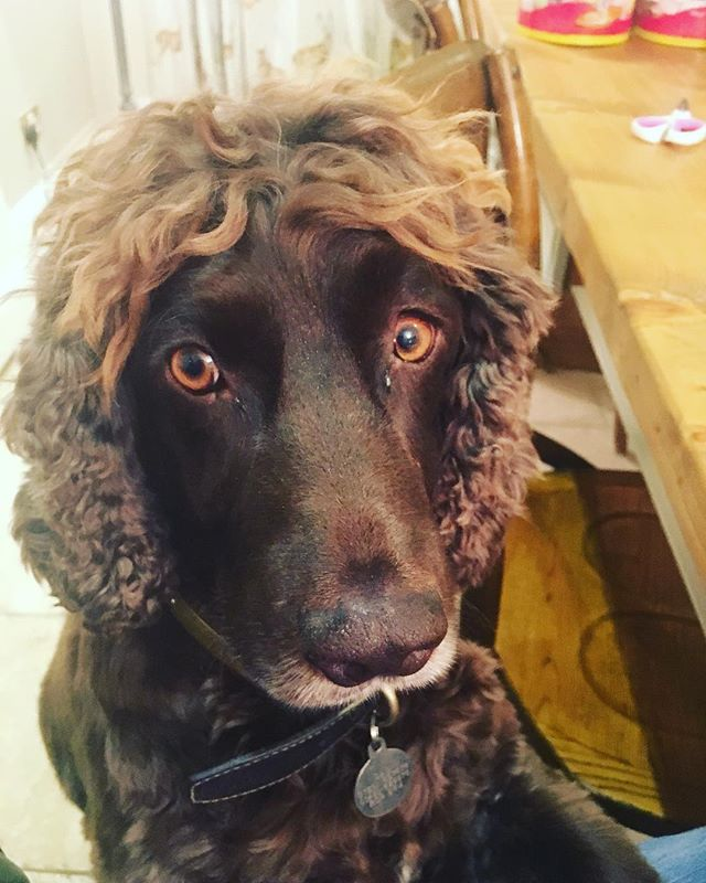 How cute is this chap? Looks like someone has been listening to @angiebestofficial advice on which amino acids you need for healthy hair!! #goodadvice #mummabest #healthyhair #askyourbesties