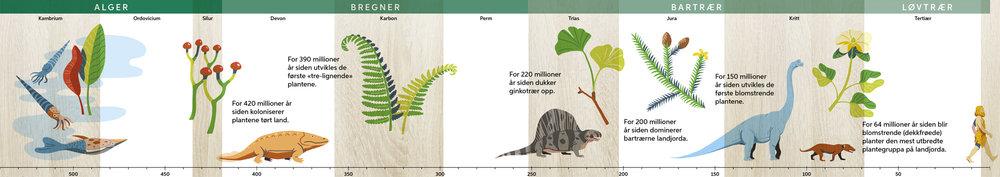 Plantenes utvikling gjennom millioner av år