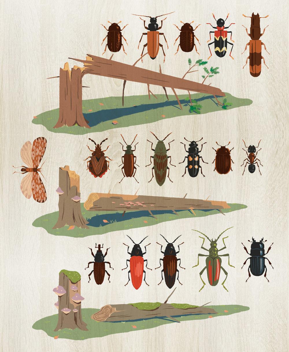 Insektene som lever i det døde treet i tre forskjellige stadier av forråtnelse