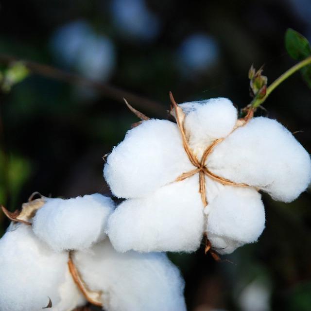 cotton-1796282_960_720.jpg