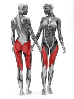 B6-1Leg-Press---Muscles (1).png