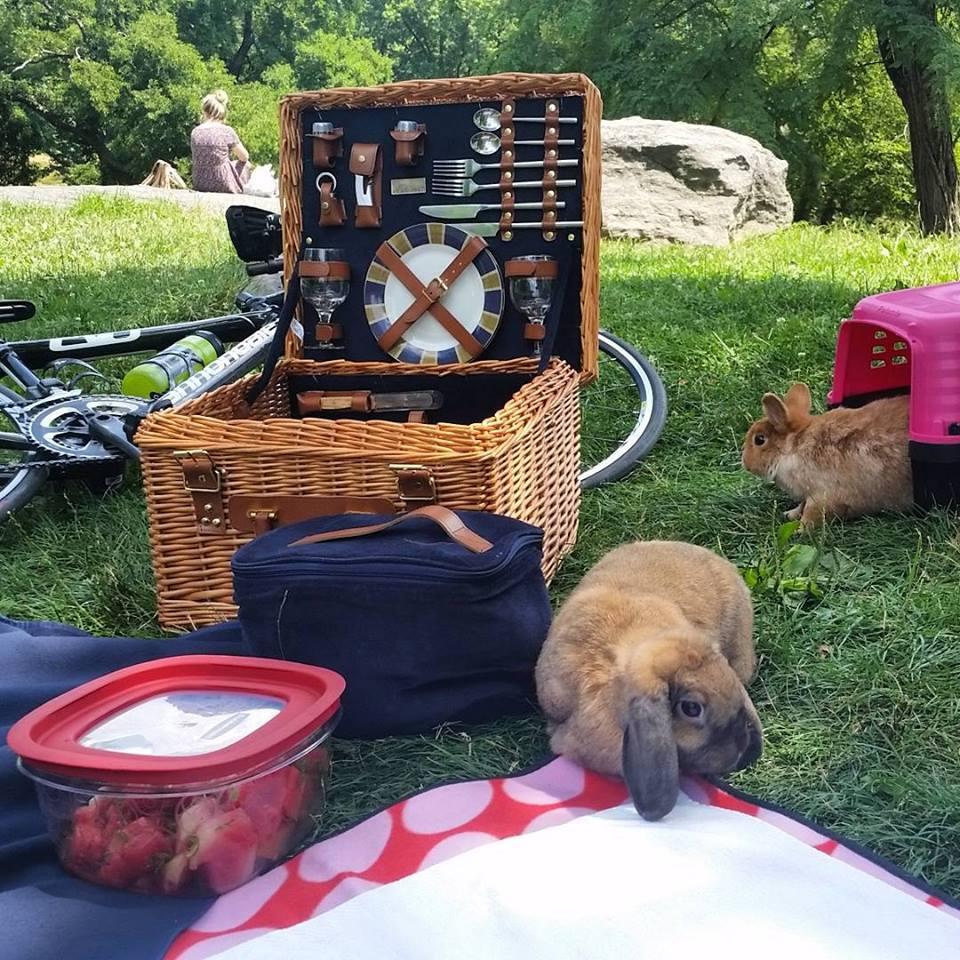 bunny picnic.jpg