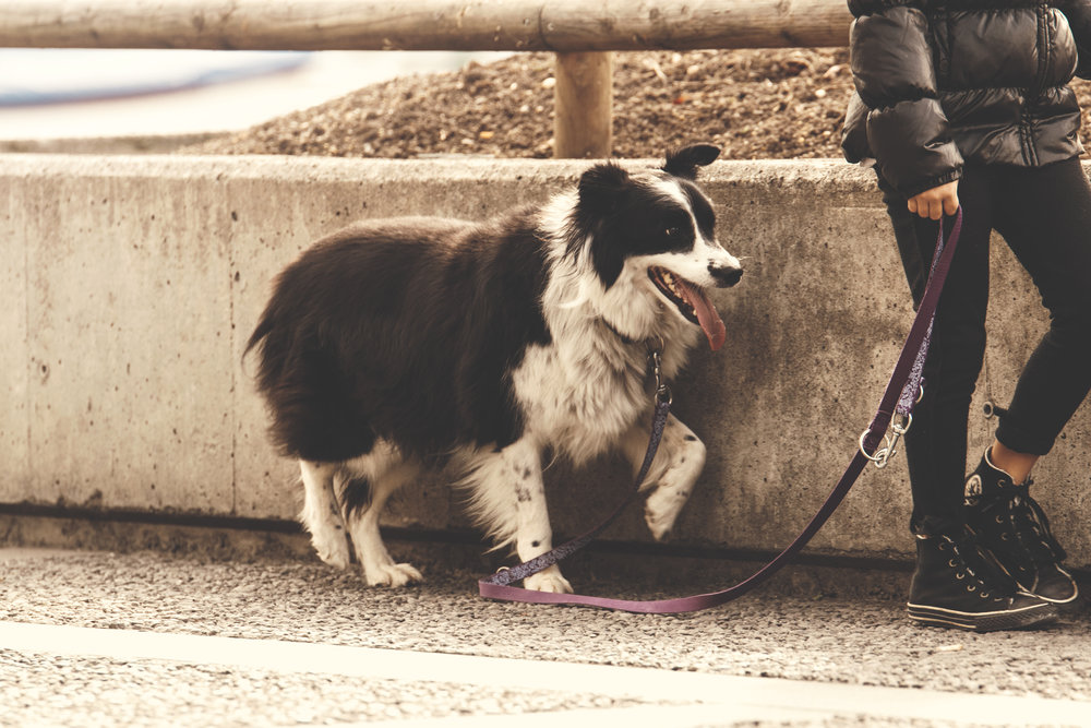 Dog with loose leash