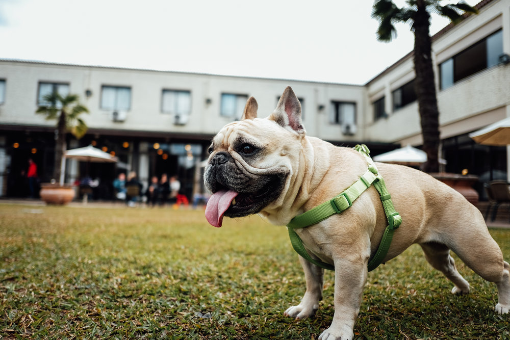 What Equipment Should You Use To Walk Your Dog Certified In Home