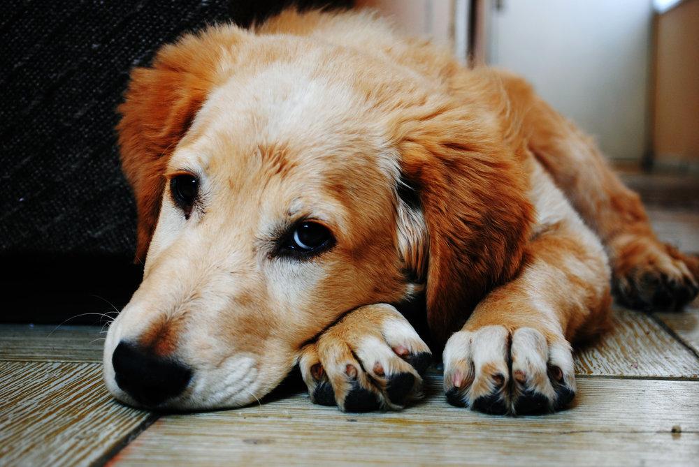 Dog feels sorry