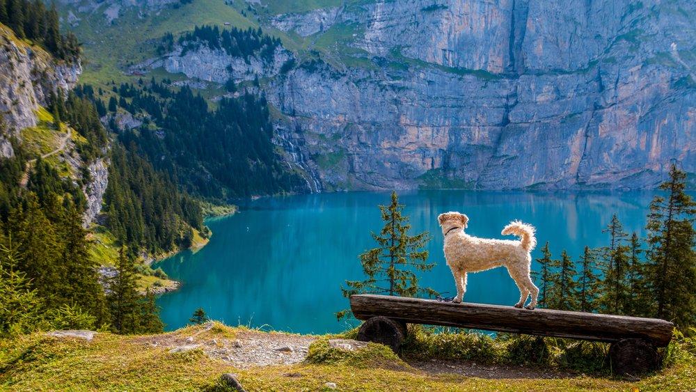 A dog behaving outdoors
